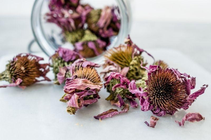 Echinacea - sušené kvety echinacei