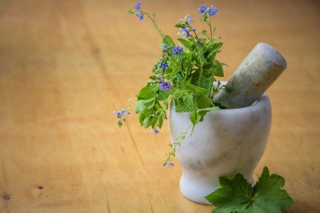 Liečivé bylinky - ako podporiť imunitu
